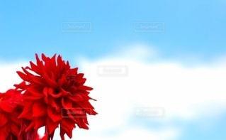 花のクローズアップの写真・画像素材[3020888]