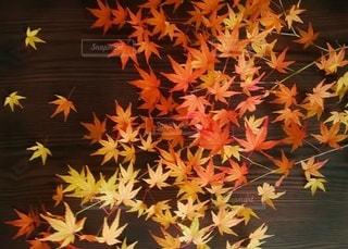 花のクローズアップの写真・画像素材[3020924]