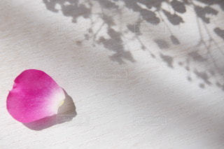 花びらの写真・画像素材[3024763]