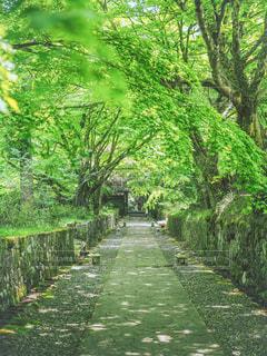 緑の道の写真・画像素材[3158074]