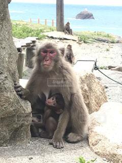 猿の親子の写真・画像素材[2792451]