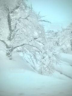 雪国の写真・画像素材[2810497]