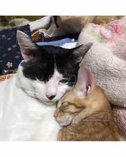 猫,動物,親子,家の中,ペット,子猫,ネコ