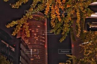 紅葉すだれる夜のタワーの写真・画像素材[2750778]