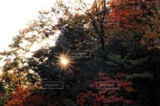 自然,空,秋,紅葉,森林,太陽,木漏れ日,光,樹木,景観,北アルプス大橋