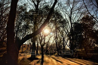 自然,風景,空,太陽,林,夕方,木漏れ日,光,樹木