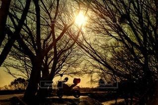 空,冬,太陽,バイク,影,木漏れ日,シルエット,光,樹木,一人旅,空間,桜の木,日中