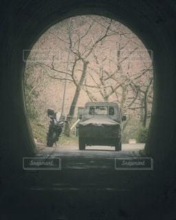 桜のトンネルの写真・画像素材[2955734]