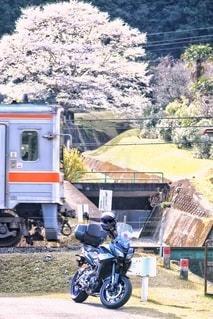 桜,屋外,電車,バイク,鉄道,淡墨桜,車両