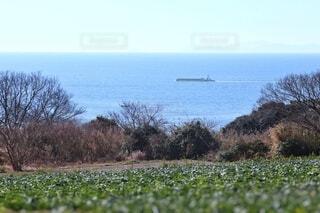 丘の上から眺める海の写真・画像素材[4133170]