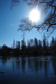 自然,風景,空,公園,木,屋外,太陽,晴れ,晴天,水面,池,景色,影,反射,光,樹木,快晴,日中