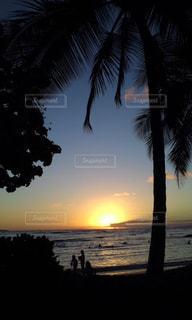自然,風景,海,空,屋外,太陽,ビーチ,砂浜,夕暮れ,海辺,水面,海岸,景色,影,日没,光,樹木,ヤシの木,夕陽,サンセット,草木,パーム