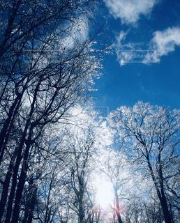 自然,空,雪,屋外,太陽,光,樹木,草木,日中,クラウド