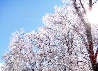 自然,空,雪,屋外,太陽,光,樹木,草木,日中