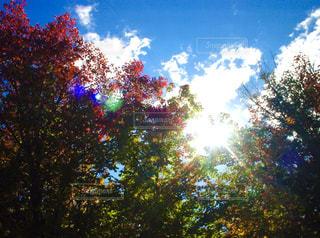 自然,空,秋,屋外,太陽,葉,日光,光,樹木,草木,クラウド