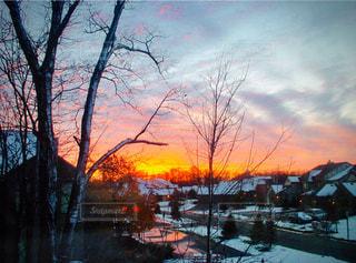 自然,空,雪,屋外,太陽,雲,夕暮れ,光,樹木,クラウド