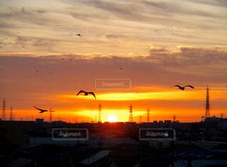 空,鳥,屋外,太陽,雲,夕暮れ,飛ぶ,光,明るい,クラウド,設定