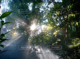 森の写真・画像素材[2863981]