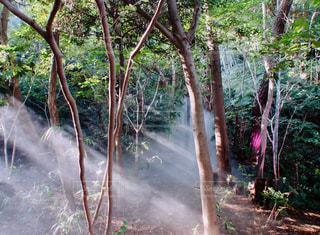 自然,風景,空,森林,屋外,太陽,霧,光,樹木,ジャングル,草木