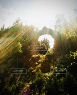 自然,風景,空,花,森林,屋外,太陽,霧,光,樹木,草木