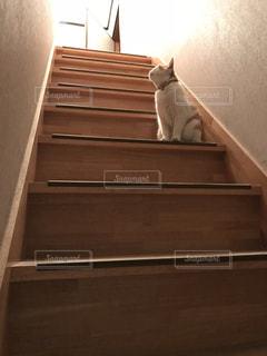 階段と猫の写真・画像素材[2753008]