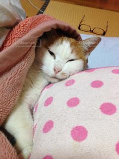 猫,ファッション,アクセサリー,屋内,家,眼鏡,ねこ,布団,寝起き,メガネ