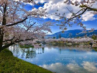 自然,風景,花,春,桜,木,屋外,湖,水面,池,花見,反射,お花見,イベント