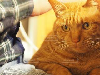 男性,1人,猫,動物,屋内,かわいい,ペット,人物,癒し,お父さん,膝の上,ネコ,ネコ科の動物