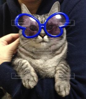猫,ファッション,アクセサリー,眼鏡,メガネ,マダム