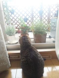 猫の写真・画像素材[2757063]
