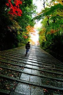京都府長岡京 光明寺 雨上がりの石段の写真・画像素材[2784168]