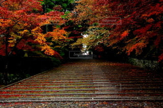 京都府長岡京 光明寺 雨上がりの石段の写真・画像素材[2784171]