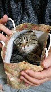 紙袋が好きな猫の写真・画像素材[2794760]