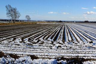 北海道 雪に覆われた畑の写真・画像素材[2809158]