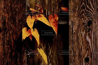 木目にからまるツタの写真・画像素材[2869933]