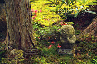 木の影で休むもみじとお地蔵様の写真・画像素材[2869932]