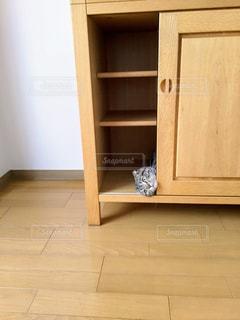 新しい家具と猫②の写真・画像素材[2871647]