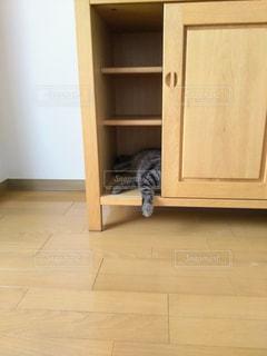 新しい家具と猫③の写真・画像素材[2871645]