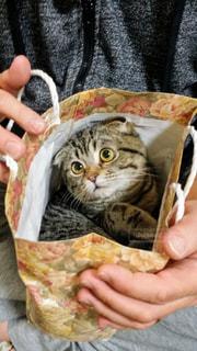 紙袋に入った猫を抱くの写真・画像素材[2888298]