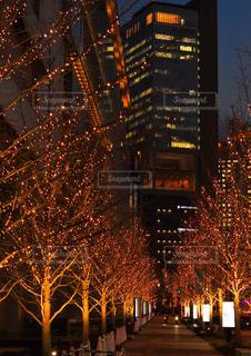 冬,夜,ビル,屋外,大阪,ピンク,オレンジ,樹木,イルミネーション,都会,ライトアップ,ツリー,梅田,グランフロント大阪,シャンパンゴールド