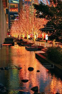 冬,夜,屋外,大阪,ピンク,水面,オレンジ,樹木,イルミネーション,ライトアップ,ツリー,梅田,関西,ゴールド,グランフロント大阪,シャンパンゴールド