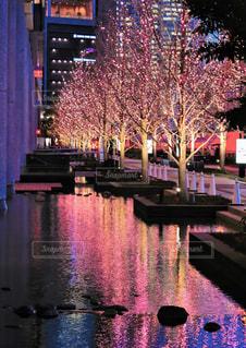 冬,夜,屋外,大阪,ピンク,水面,オレンジ,樹木,イルミネーション,ライトアップ,ツリー,梅田,関西,ゴールド,グランフロント大阪,多色,シャンパンゴールド