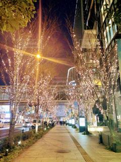 冬,夜,屋外,大阪,樹木,イルミネーション,ライトアップ,ツリー,梅田,関西,グランフロント大阪,シャンパンゴールド