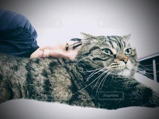 猫とうたた寝の写真・画像素材[2952255]