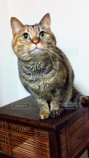 猫,動物,屋内,ペット,人物,木目,ネコ,ネコ科の動物,木製の家具