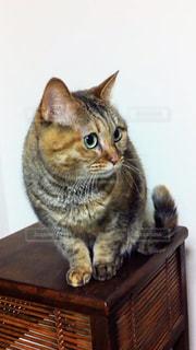 猫,動物,かわいい,ペット,人物,木目,ネコ,ネコ科の動物,木製の家具