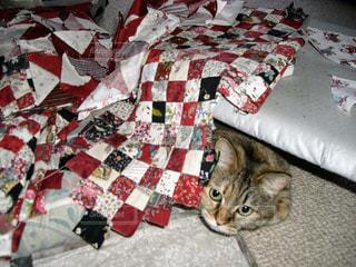 猫,動物,ペット,人物,裁縫,パッチワーク,隠れんぼ,ネコ