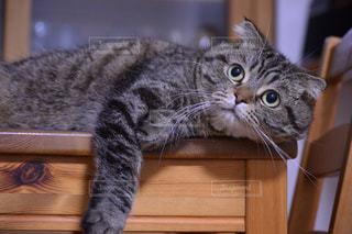 木のテーブルの上に座っている猫の写真・画像素材[2965968]