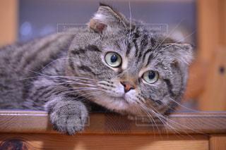 木のテーブルの上に座っている猫の写真・画像素材[2965967]