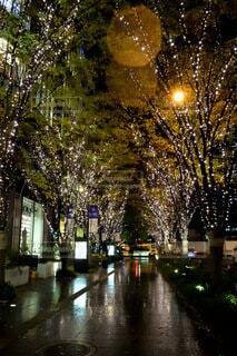 自然,夜,雨,屋外,きれい,樹木,イルミネーション,都会,ライトアップ,クリスマス,照明,ステージ,グランフロント大阪,街路灯,シャンパンゴールド,クリスマス ツリー,グランフロントクリスマス,#グランフロント大阪#クリスマス#グランフロントクリスマス#イルミネーション#シャンパンゴールド#PR#snapmart